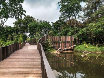 bird-wave-bridge-by-shma
